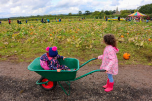 England: 7 Great PYO Pumpkin Patches in East Yorkshire